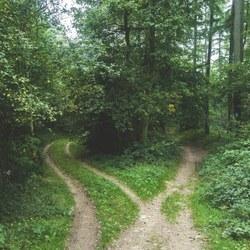 Se balader partout en forêt, possible ou pas?