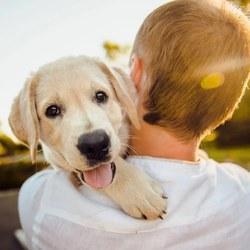 Animalweb, LE site de référence des amis des animaux